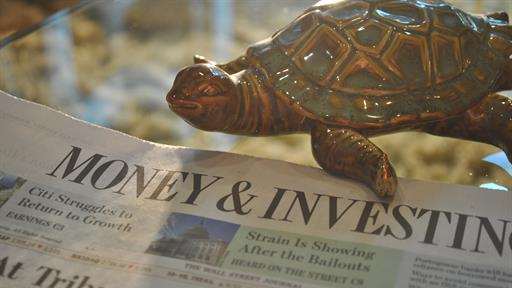 News and Turtle2