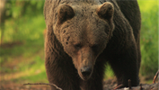 With the Market at New Highs, How Should You Prepare for the Bear?